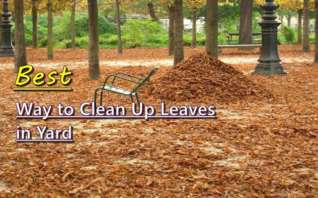 best way to clean up leaves