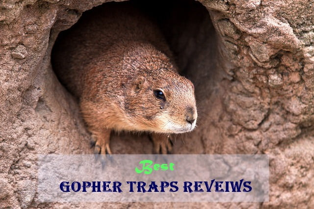 best gopher traps reviews