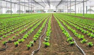 How Does a Drip Irrigation System Work