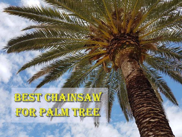 top Chainsaw for Palm Tree