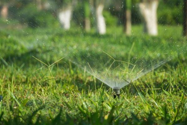 watering zoysia grass