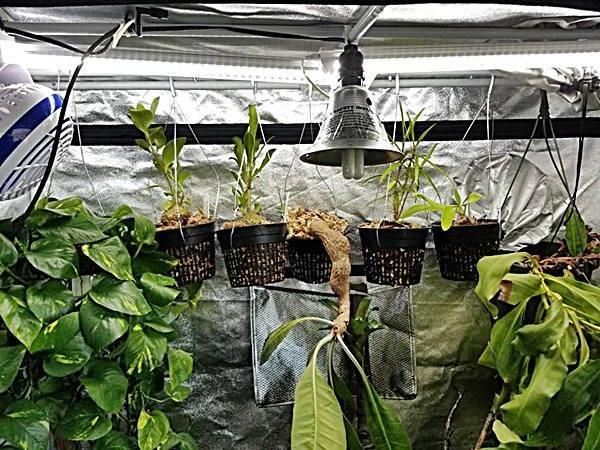 fan for grow tent