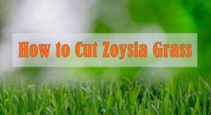 How to Cut Zoysia Grass