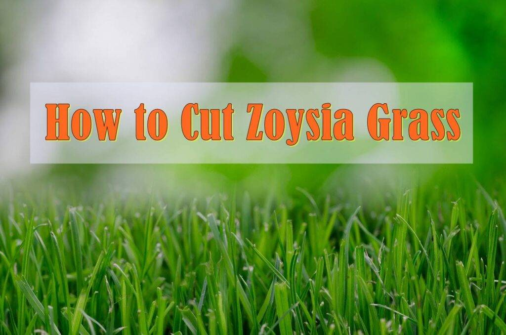 mowing Zoysia grass