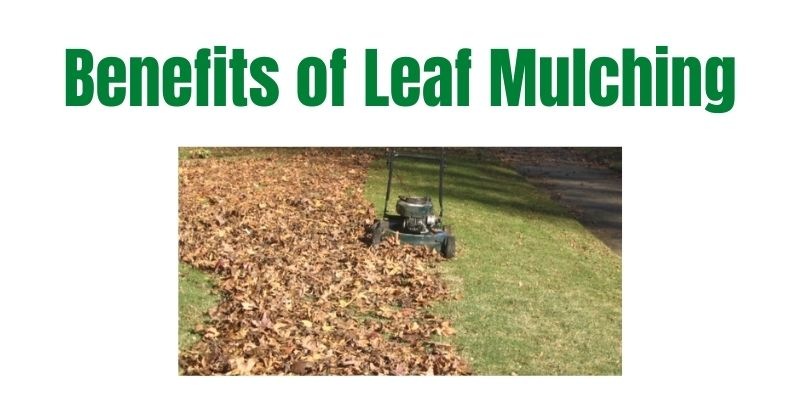 Benefits of Leaf Mulching