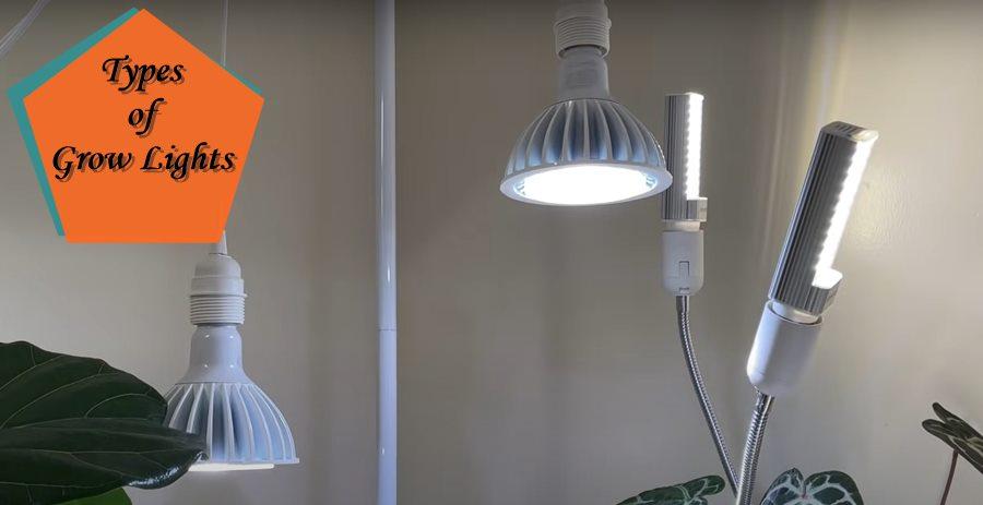 Types of Grow Lights for Indoor Plants
