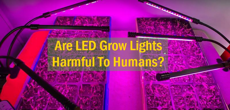 Are LED Grow Lights Harmful To Humans