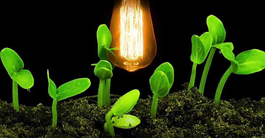 how to grow under Artificial Light
