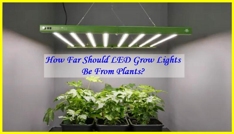 grow light distance calculator