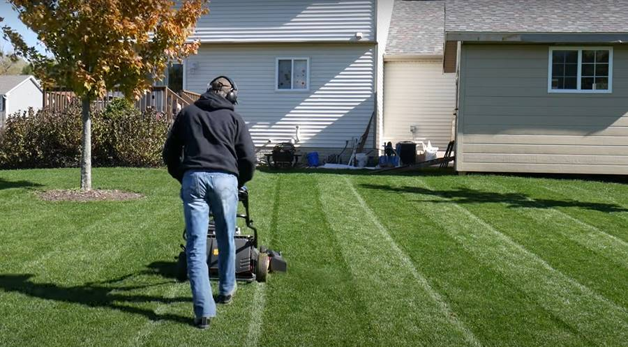 How To Grow Zoysia Grass on Existing Lawn