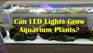 Can LED Lights Grow Aquarium Plants
