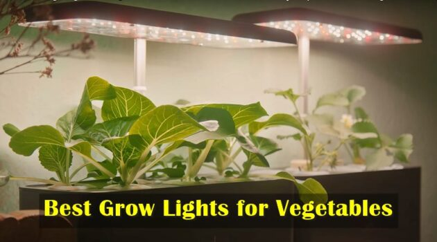 Grow Lights reviews for Vegetables