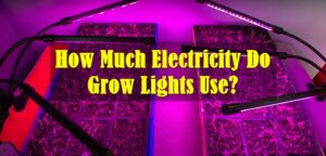 How Much Electricity Do Grow Lights Use