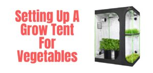 Setting Up A Grow Tent For Vegetables